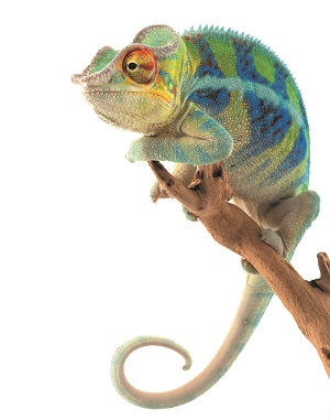 Chameleion Colours from No 7